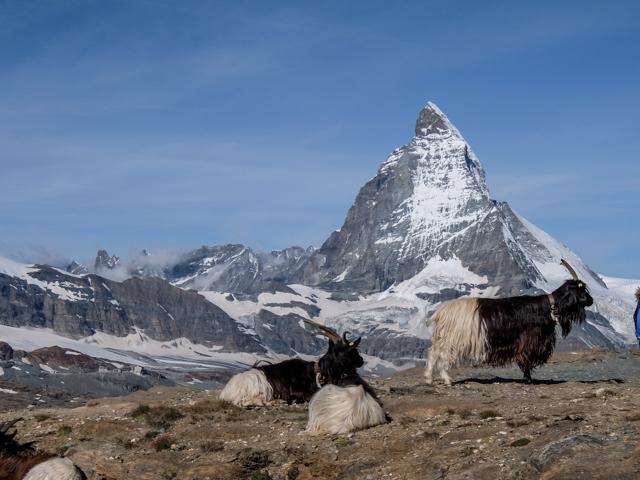 Swiss-Zermatt51