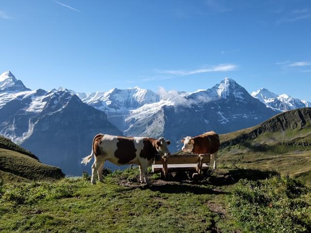 Swiss-Grindelwalt-52
