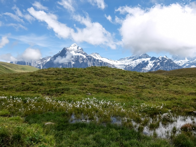 Swiss-Grindelwalt-69
