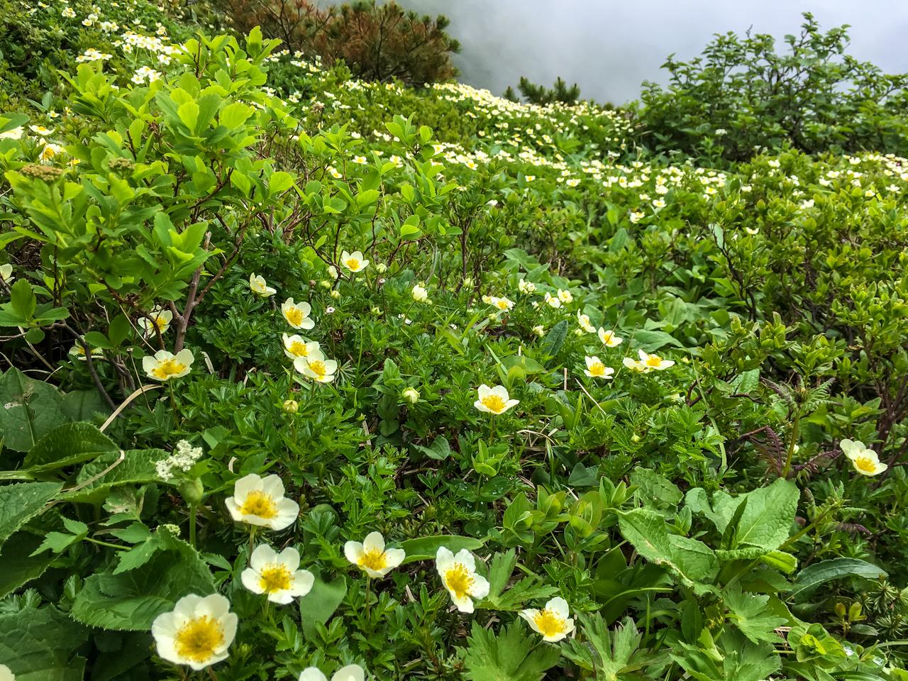 富良野岳登山 015-70-37