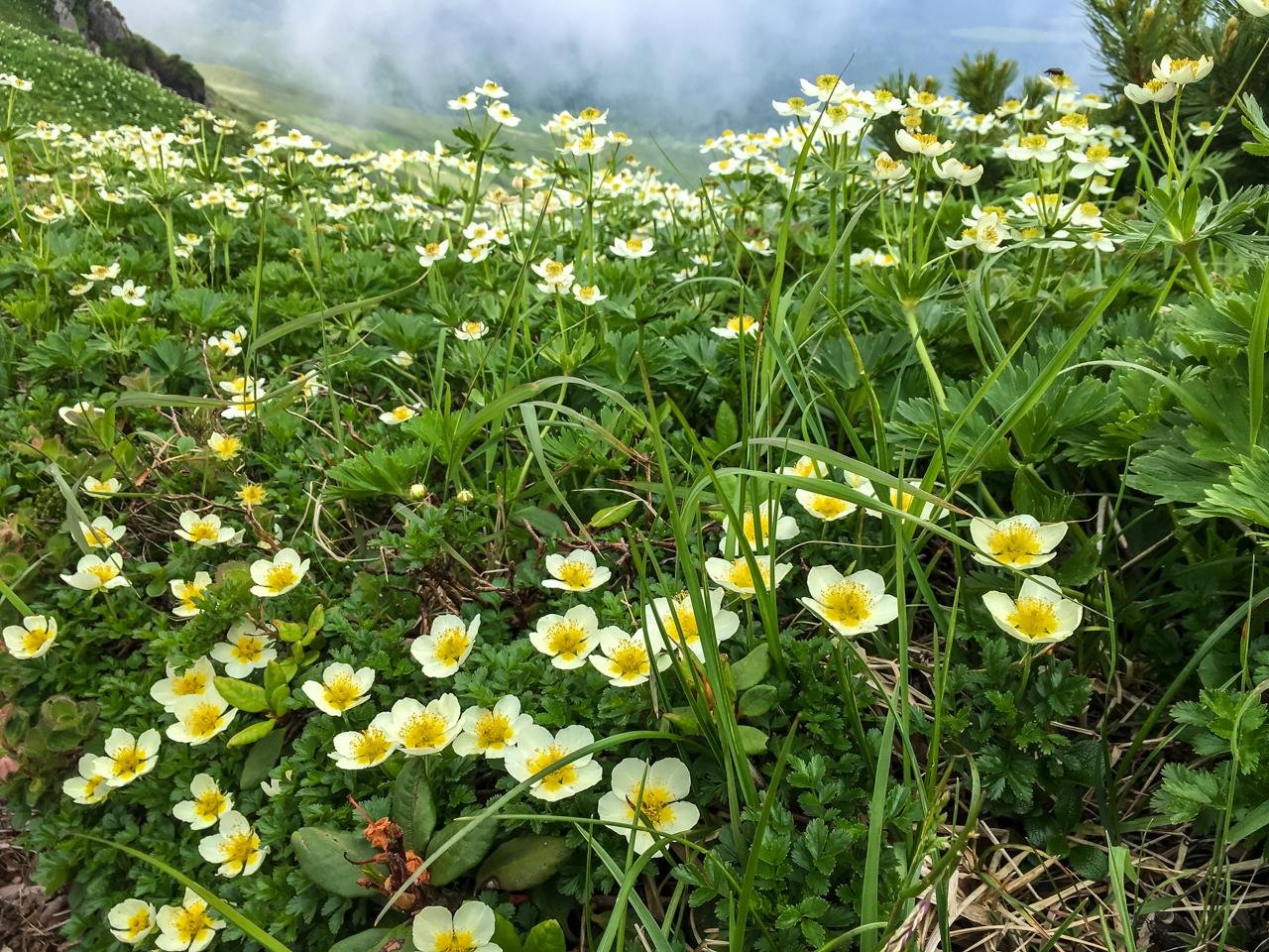 富良野岳登山 025-111-57
