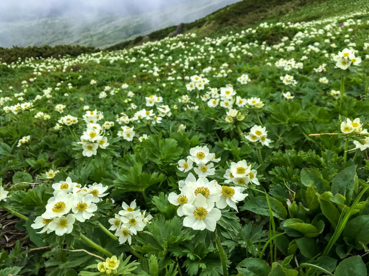 富良野岳登山 021-97-52