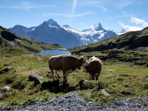 Swiss-GrindelWald011