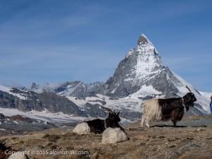 Swiss_Camp&Trecking_Zelmatt