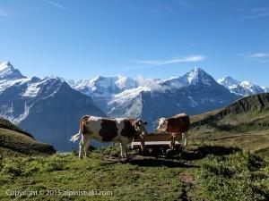 Swiss-GrindelWald014