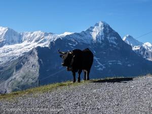 Swiss-GrindelWald015